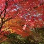 紅葉(その2)